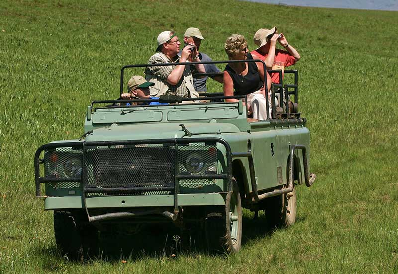 People Experiencing a Safari Image